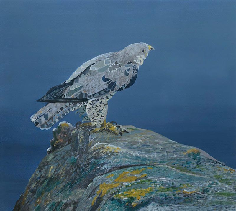 Falcon by the Sea by Liam O'Halloran