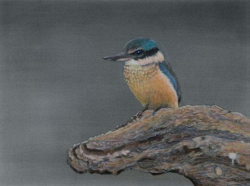 Kingfisher by Liam O'Halloran