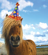 miniature_horse_birthday_hat_200